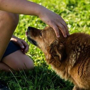 assicurazione cane poste